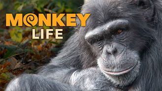 Netflix box art for Monkey Life - Season 8